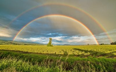 July Delight in the Word Challenge – Rainbow: Colors of Promise